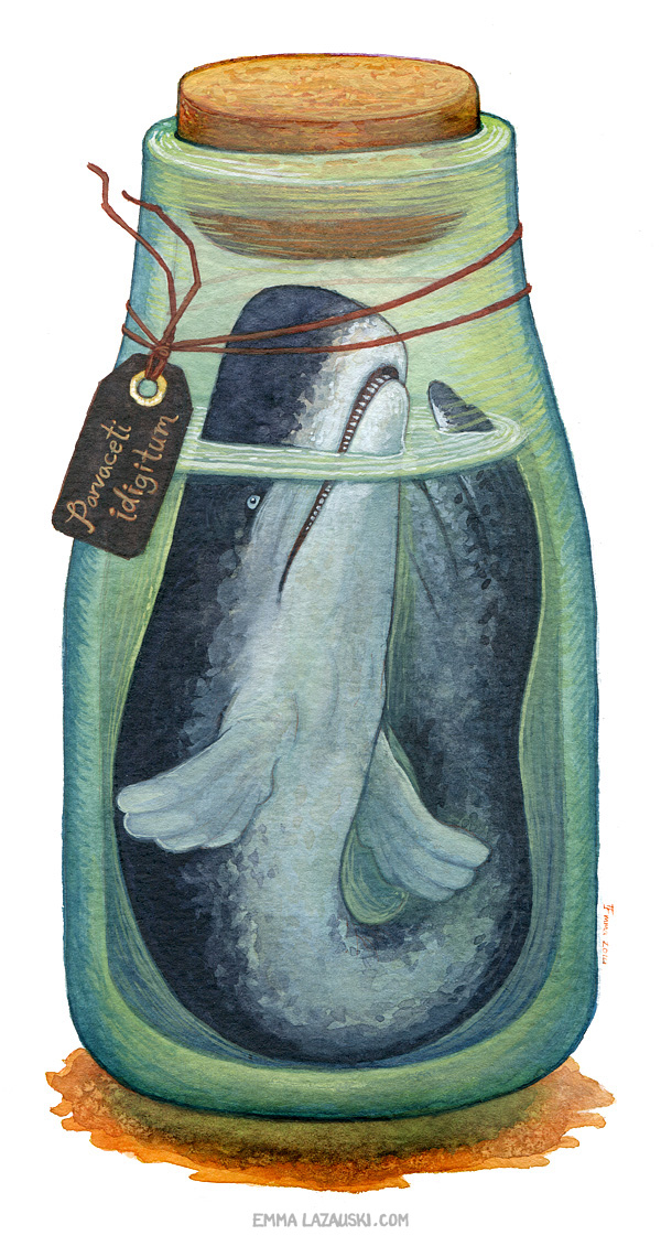 2014-bottled-tinywhale01-w