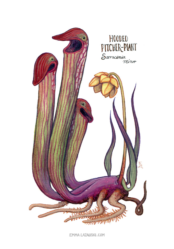 Hooded Pitcher Plant Sprite