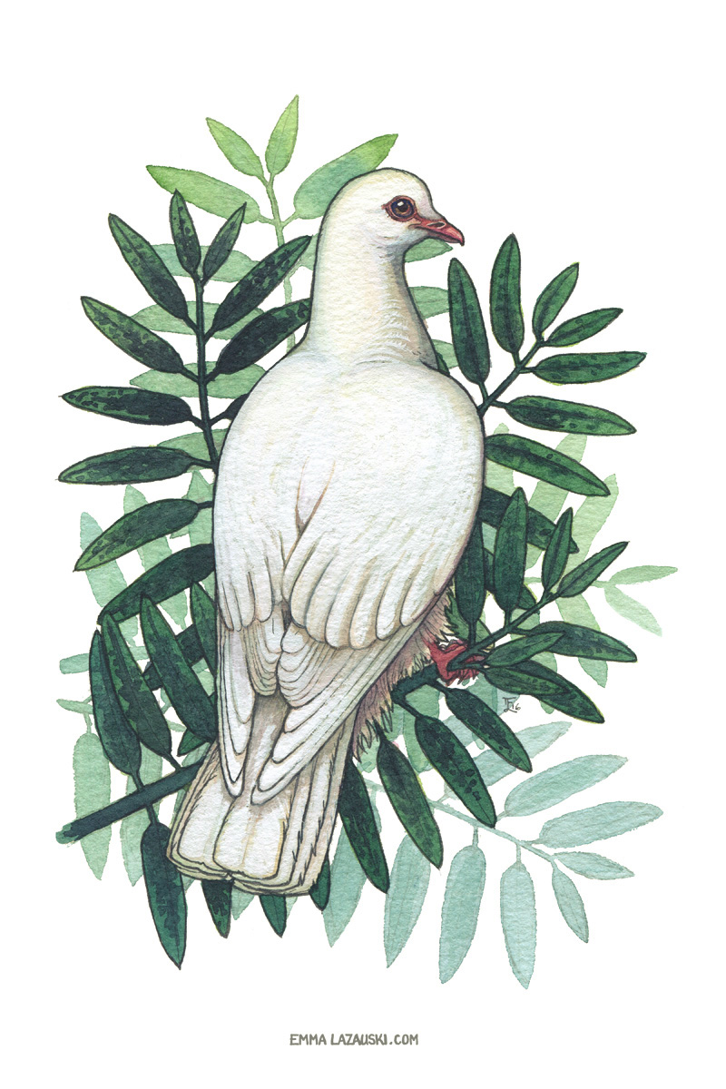 """Peace Dove"" 6x9 inches, watercolor Meditating on troubled times."